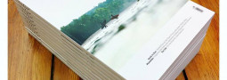 Waves and Wood Surfmagazin