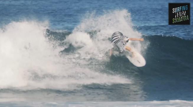Surfing-Zebra-Sumatra-Still-2